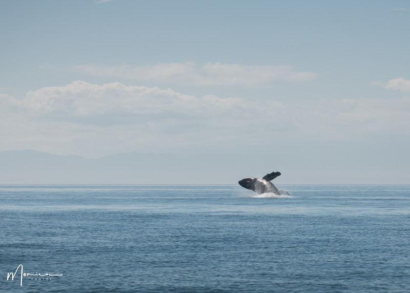 2019-08-31 - Whale Watching-0783_edit.jpg