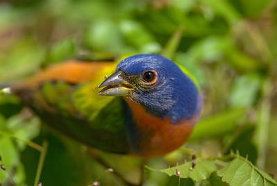 Birds of Spring