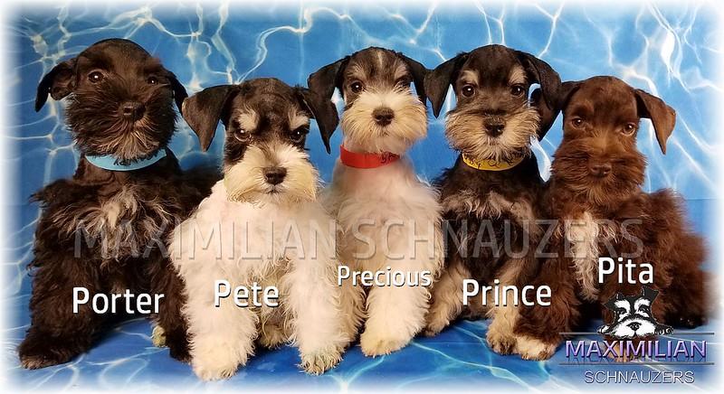 Brandi Pups 011.jpg