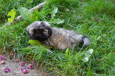 20140608 Sophie's New Puppy