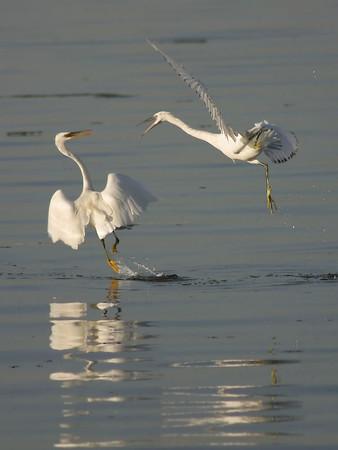 Birds - Persian Gulf