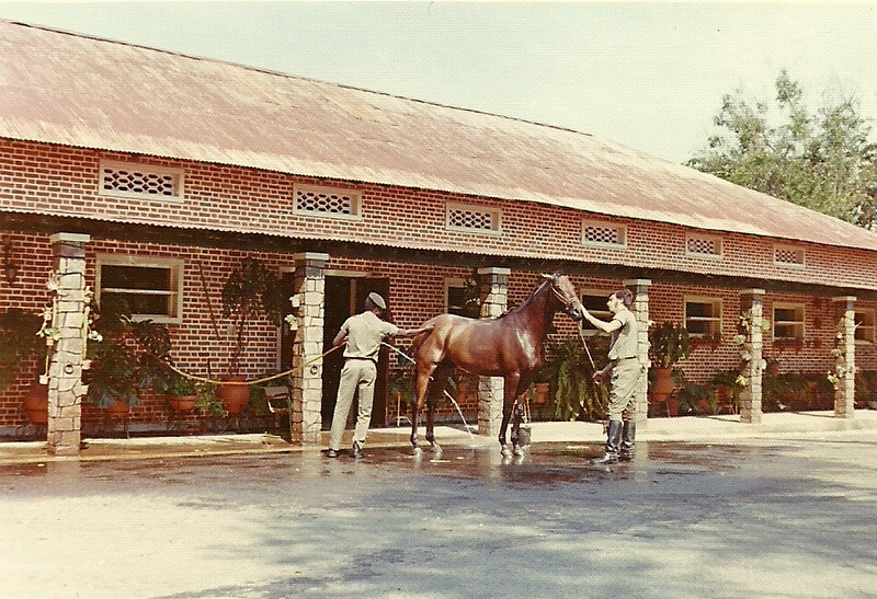 Cavalos no tempo do Sr. Bonito
