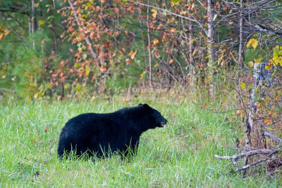 USA, TN - Great Smoky Mountains National Park