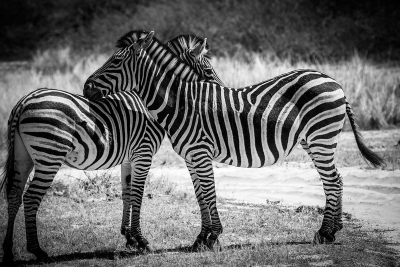 Botswana_June_2017 (637 of 6179).jpg