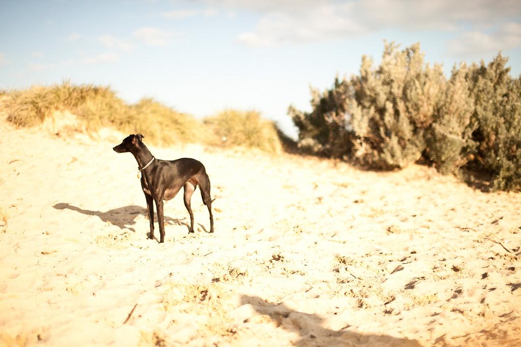 Dogsonbeach-AlexanderGardner-0003-20100614