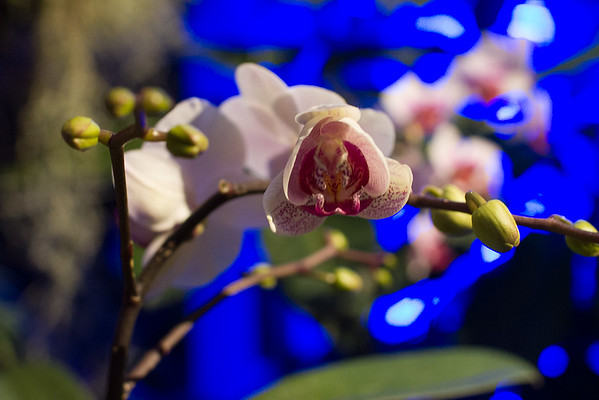 Orchid Show 2018