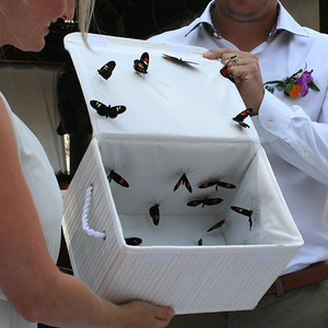 217140-butterfly-ceremony