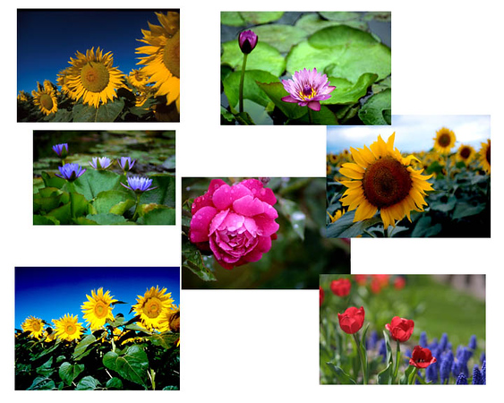 More flowers to choose from.jpg