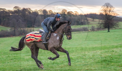 THE GALLOPS  - JANUARY 2016