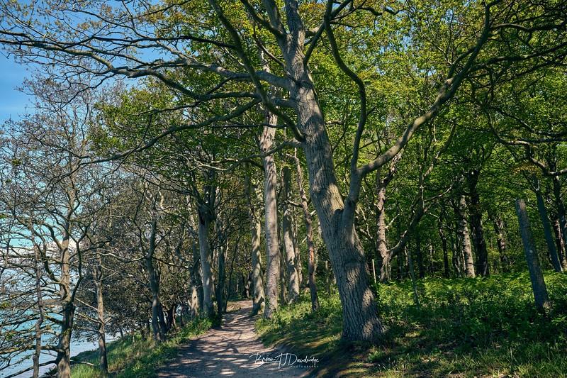 Waterside Walk