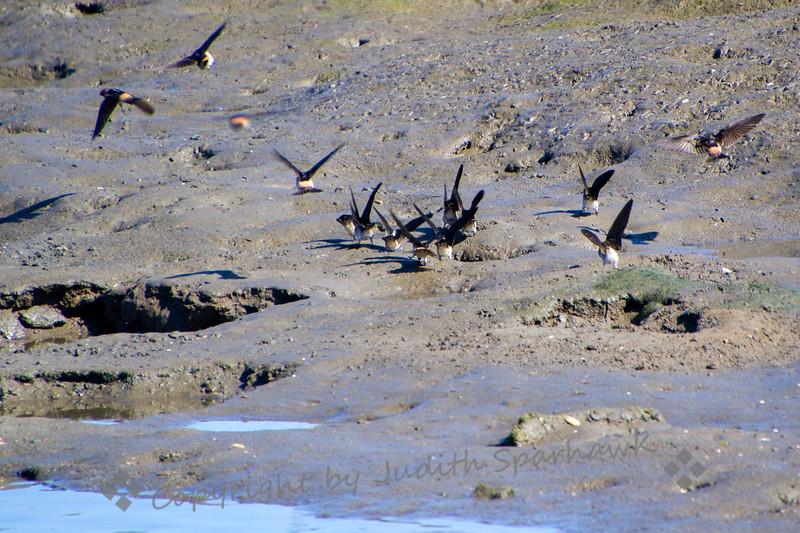 At the Mud Hole - Judith Sparhawk
