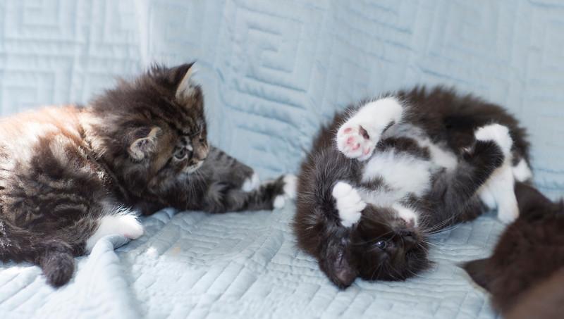 Kittens251.jpg