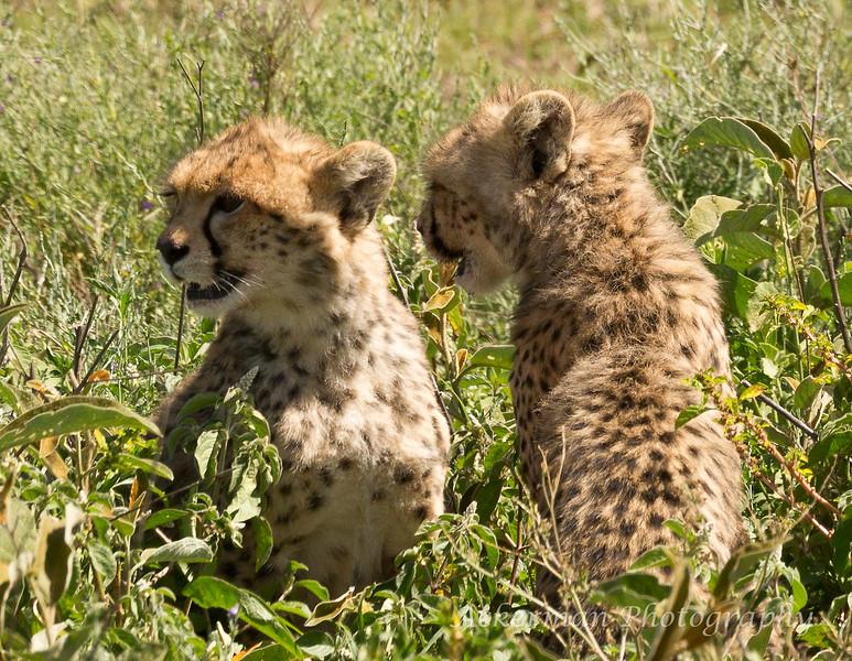 Tanzania_3S4A4461-Edit.jpg