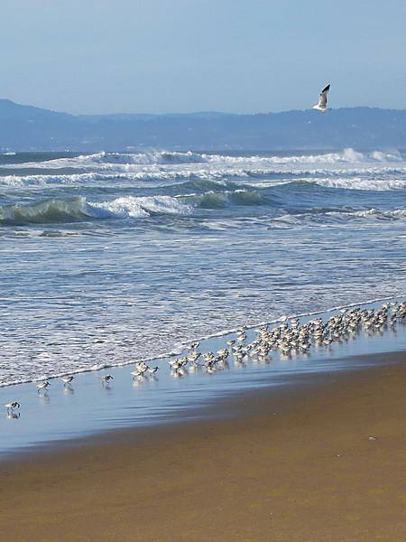 Shorebirds 0150.jpg