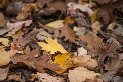 Autumn Forest 27OCT14