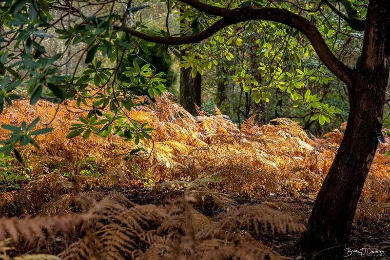 Wakehurst_Autumn-6115.jpg