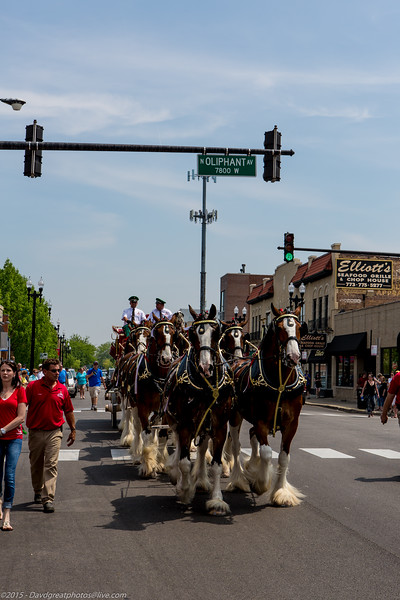 20130519EP_Budweiser_Clydesdales-177.jpg