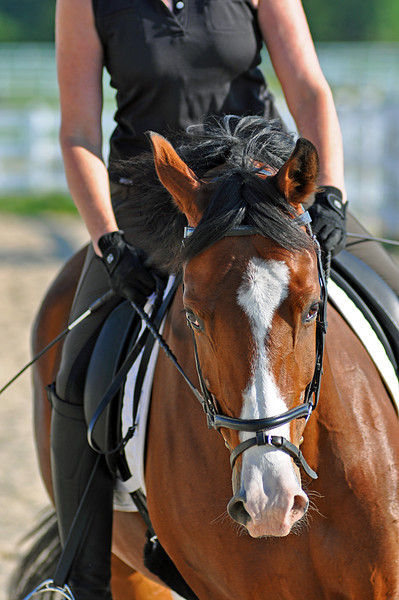 Horses July 2011 175a.jpg