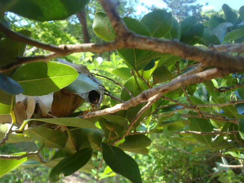 Wildlife ant nest with ants.JPG