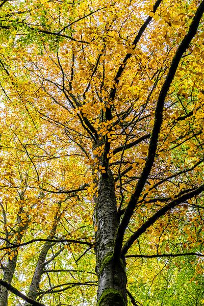 Oregon, United States