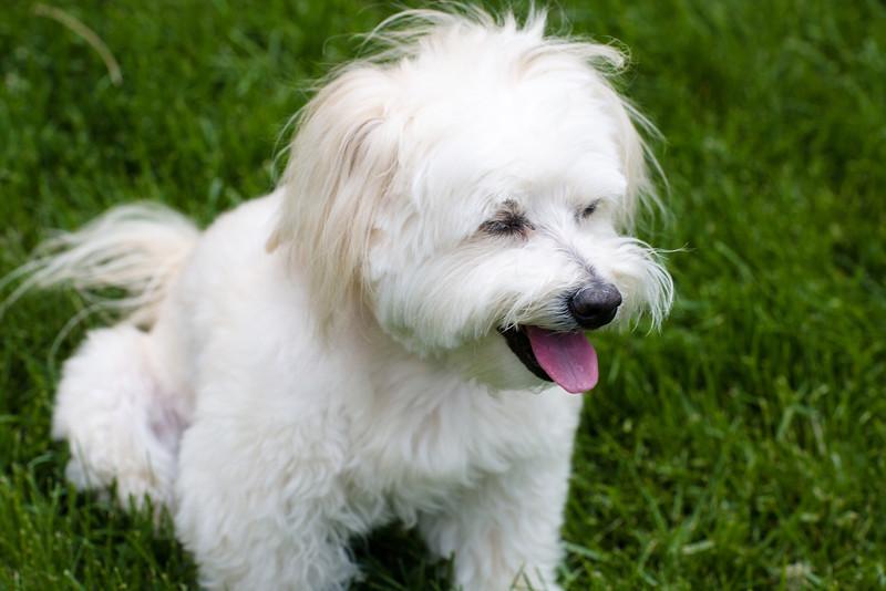 opal mike dogs (1 of 1)-84.jpg