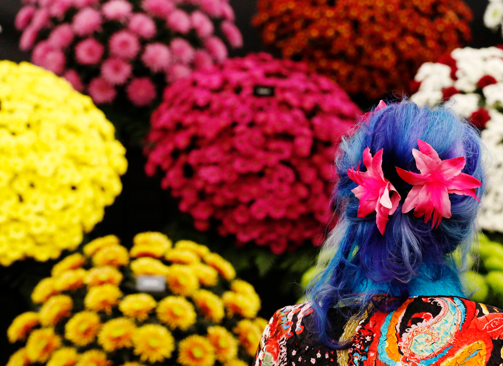 . A woman with flowers in her blue dyed hair looks at chrysanthemums at the Chelsea Flower Show in London May 21, 2013. REUTERS/Luke MacGregor