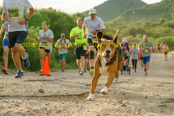 10'th Annual Colossal Cave 5K 2017