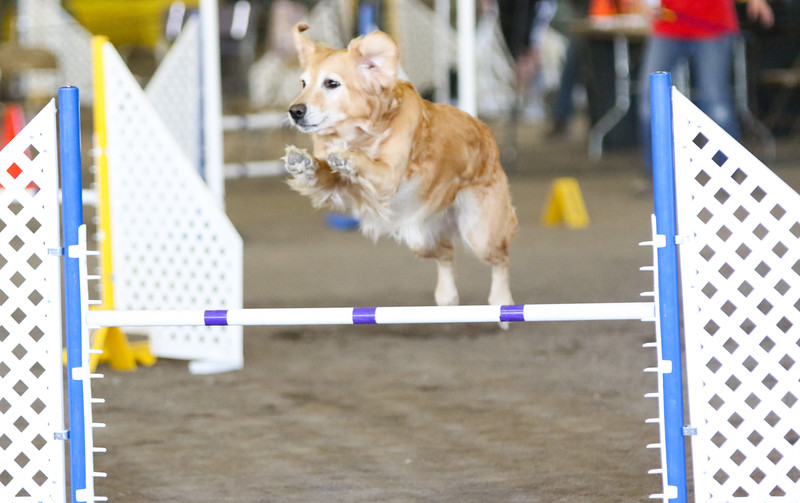 3-15-2015 Bloodhound-1543.jpg