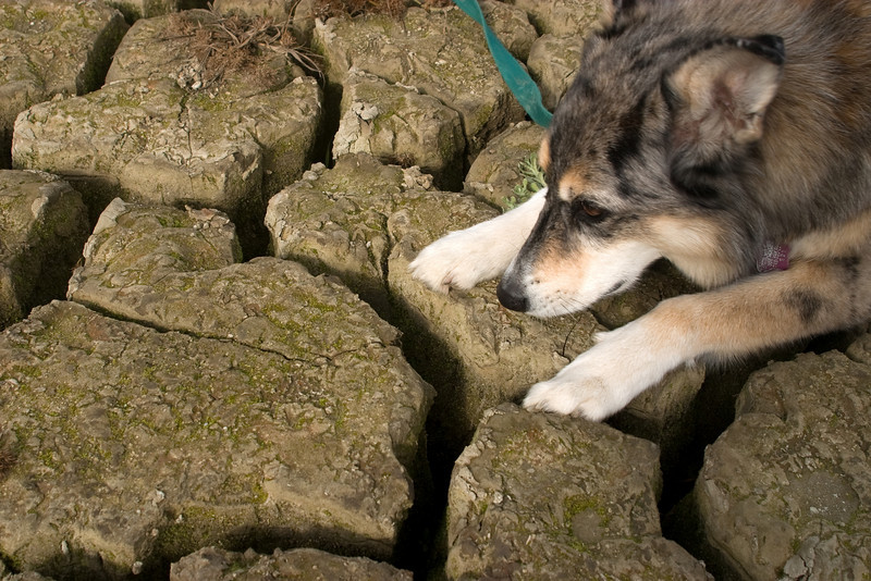 Tika demonstrates how deep the cracks are--at least a foot, with a bit of water at the bottom.
