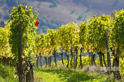GUTIZIA - Domaine viticole