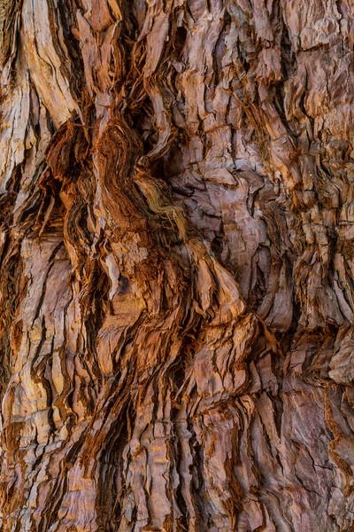 Barkscape: Sequoia | Mt. Palomar