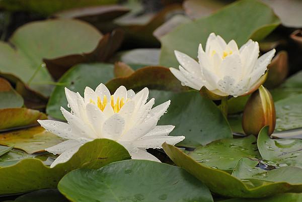 Wild flowers & plants
