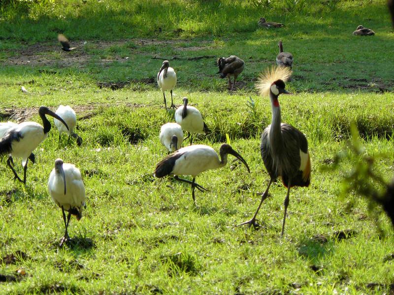 Birds Haller Park.jpg