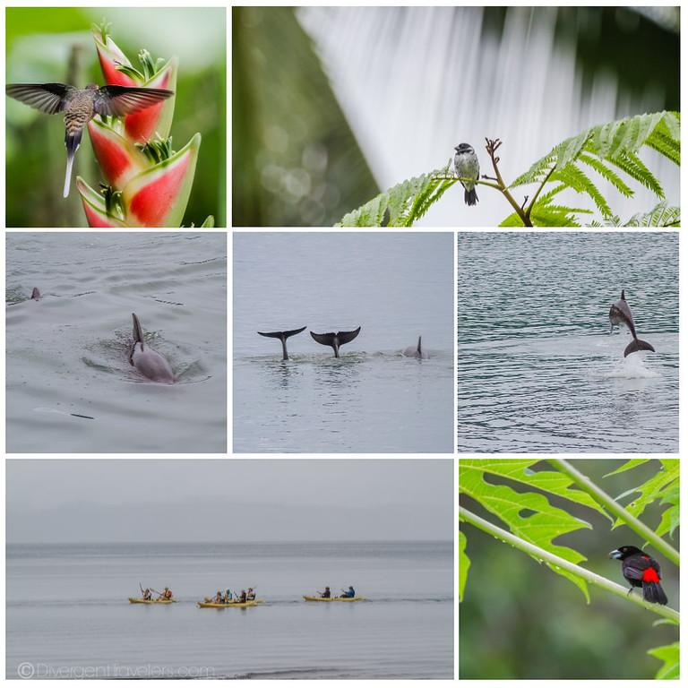 Golfo Dulce- Cruise Costa Rica