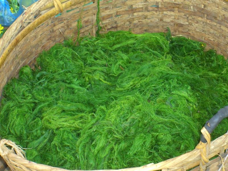 Mekong River Weed - Luang Prabang, Laos