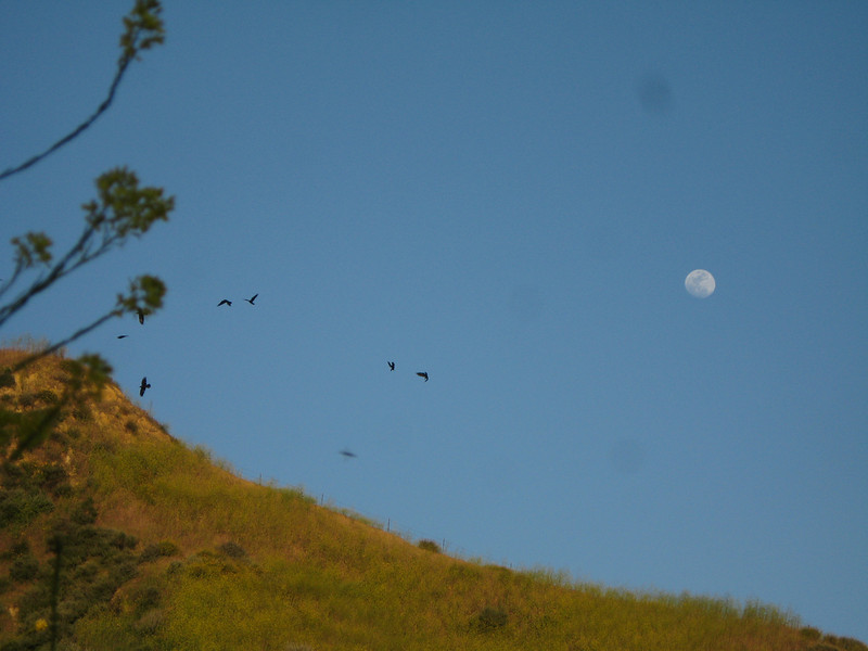 20080417020-New Millenium Trail, trailwork, moonrise.JPG