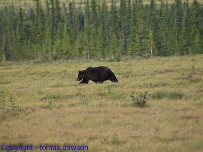 Day 30 - Dempster to Dawson City