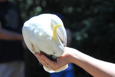 20110131 Philip Island