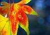 STOCK IMAGES - Fall Season :