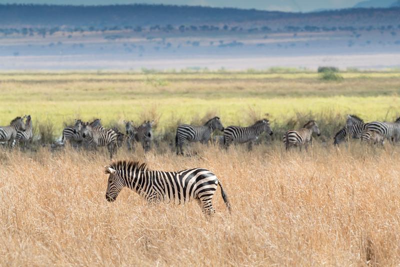 Africa - 102116 - 8217.jpg