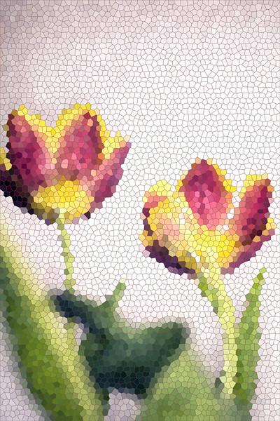 Tulip-Stainglass_0562.jpg