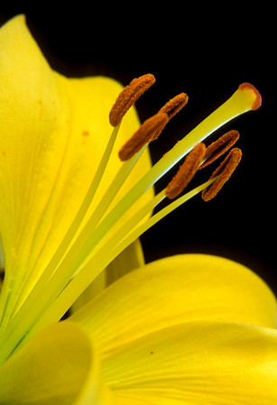 Plant Photography by Paul Retherford Photography, LLC