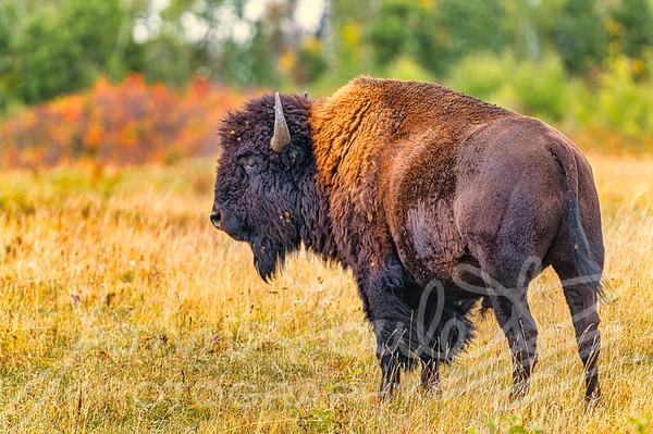 Riding Mountain National Park Nikon D780 2020-09-17