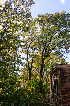 Shawn Mort Tree Service