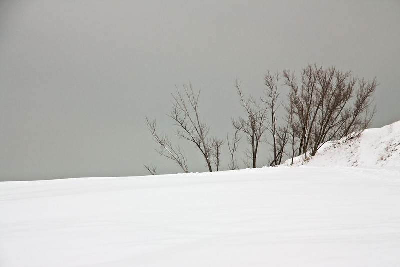 Bare trees and snow. Warren Dunes State Park, Michigan.