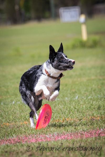 _MG_2889Up_dog_International_2016_StephaniellenPhotography.jpg
