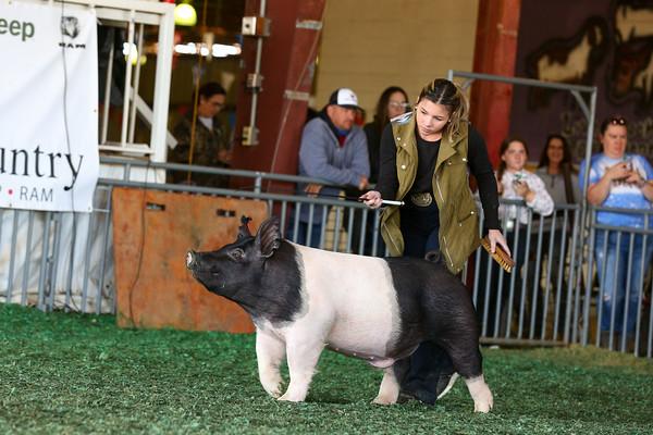 Market Swine