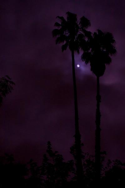 Moon Night_10-9.jpg