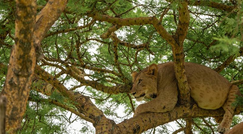 Uganda_T_QE-1127.jpg