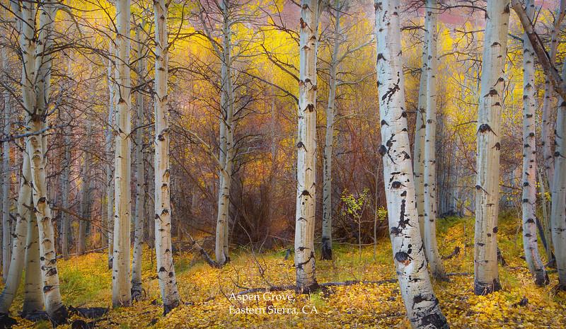aspen grove V2jpg005.jpg